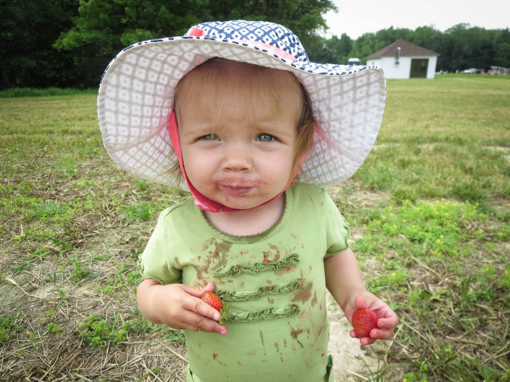 toddler girl wearing a blue and white sun hat eating messy red strawberries in a strawberry field at Krupp Farms
