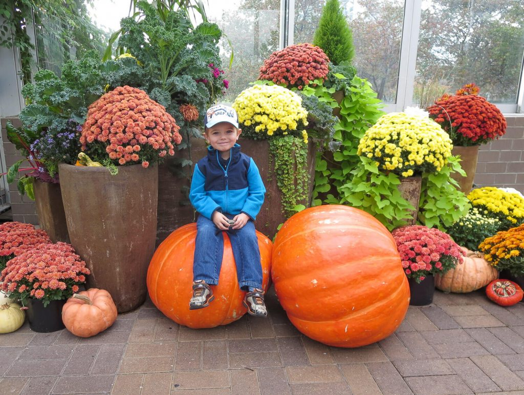 toddler boy sitting on giant pumpkins surrounded by mums at Meijer Gardens